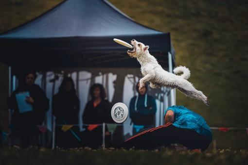 Nel fine settimana a Cumiana arrivano i 'cani volanti' del disc dog