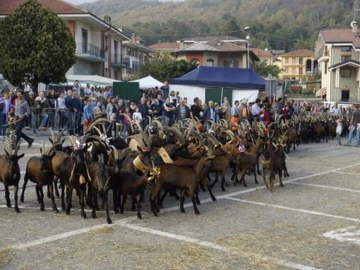 Annullamento XX festa rurale del Cevrin di Coazze