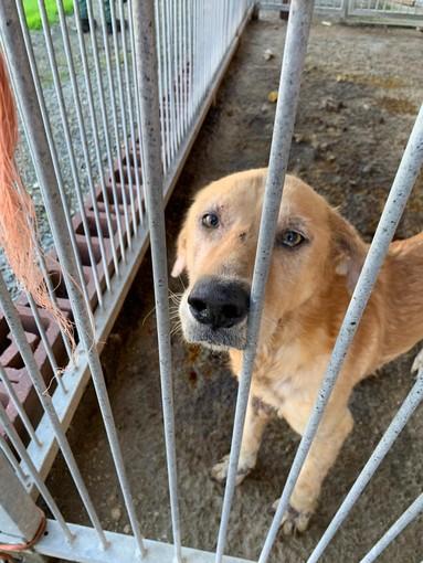 None: il cane dormiva tra gli escrementi, denunciato per maltrattamenti animali (FOTO)