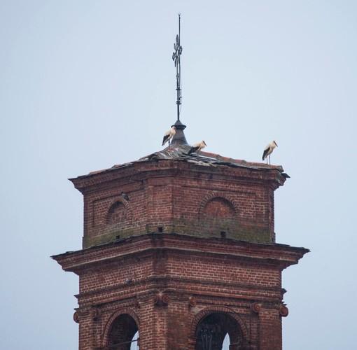 Il campanile di Osasco