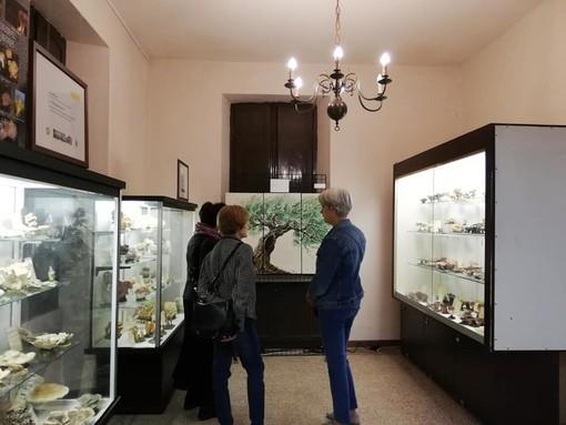 Museo Strani scienze naturali Pinerolo