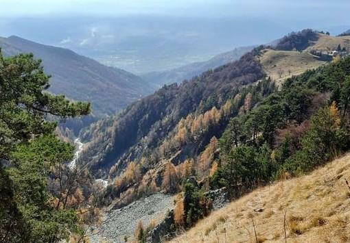 Legambiente Piemonte e Valle d'Aosta e Parco Alpi Cozie 'duellano' su ricerca e tutela del lupo
