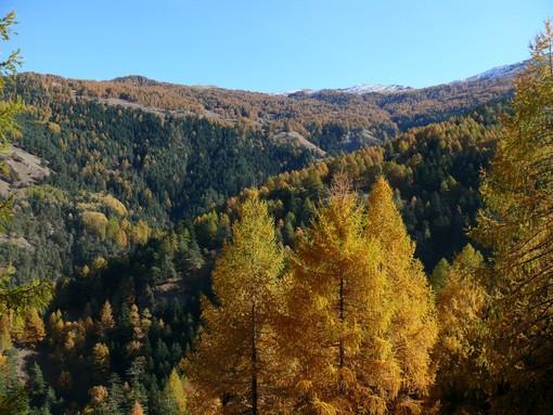 Parchi Alpi Cozie