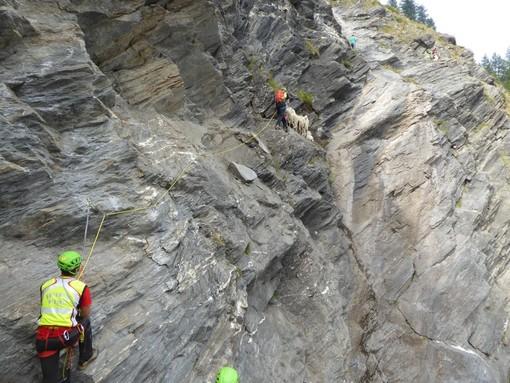 Il soccorso alpino salva un gruppo di 10 pecore a Salza di Pinerolo (FOTO)