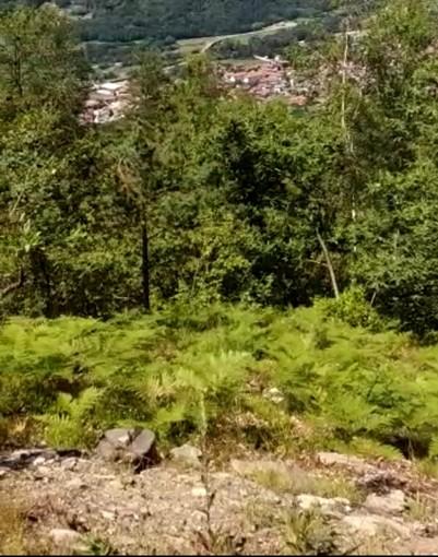 La zona di borgata Miandassa in cui sono state tagliate le piante
