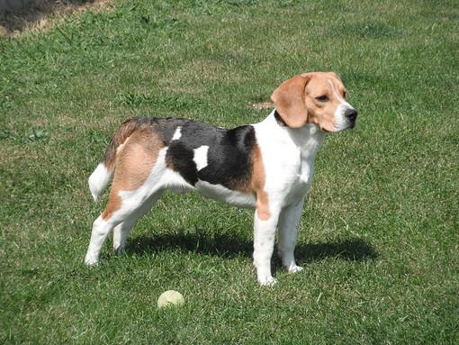 Il biometano di Acea farà correre anche i cani del canile di Pinerolo