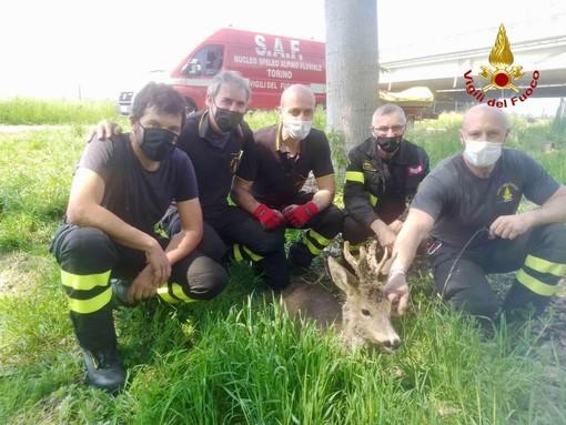 animali salvati dai vigili del fuoco