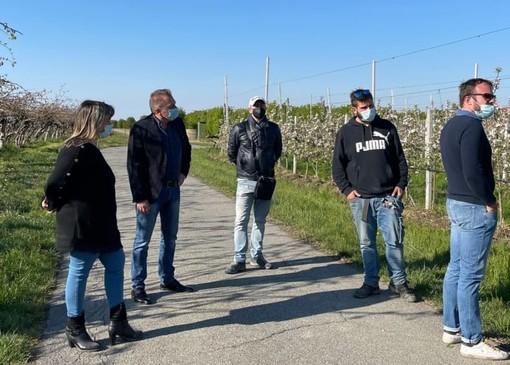 """Gelata straordinaria nei frutteti del Saluzzese, Bongioanni: """"Si garantisca almeno il 40% delle perdite"""" [VIDEO]"""